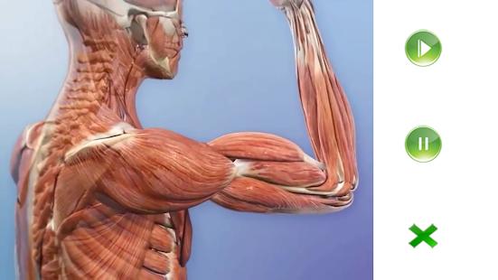 Visual Anatomy Free - Aplicaciones en Google Play