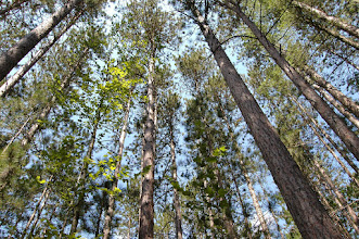 Photo: Magnificent forest at Brighton State Park