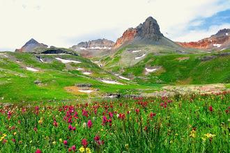 Photo: Rosy Indian Paintbrush Wildflowers