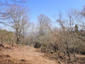 左は伐採跡