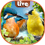 Birds Live Wallpaper with Sound 🐦 Lock Screen APK icon