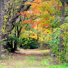 by Missy Grove Horne - City,  Street & Park  City Parks (  )
