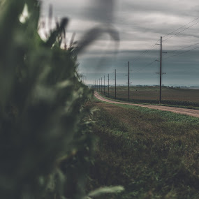 Lonely Road by Corey Gross - Landscapes Prairies, Meadows & Fields ( south dakota, overcast, gravel, corn, country )
