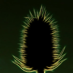 Detail of thistle on green ! by Pete Schmit - Nature Up Close Other plants