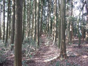 植林帯を通る