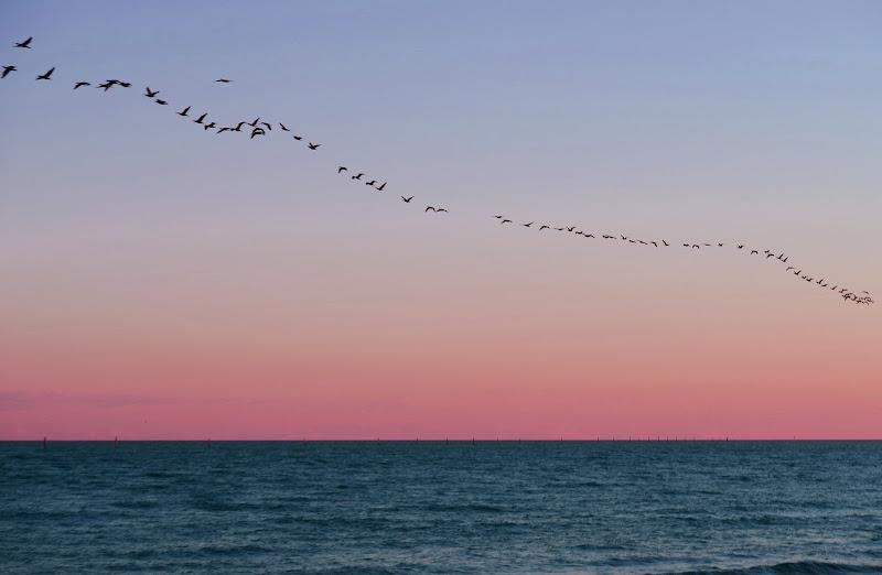 La migrazione dei pensieri di Luigi Leandrin