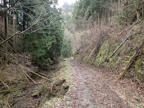 林道を黙々と歩く
