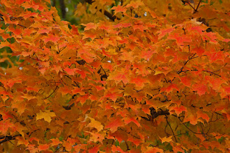 Photo: Fall Leaves Wisconsin