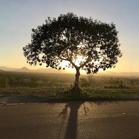 A tree by Daniel Wheeler - Landscapes Sunsets & Sunrises ( queensland, tree, shadow, sunset, australia, sun )