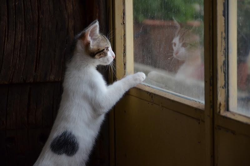 affacciati alla finestra amore mio  di tina_meoow