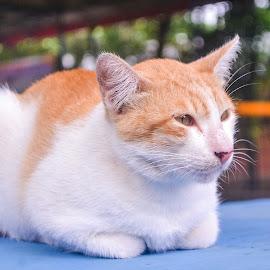 Tired by Dwiky Apriliawan - Animals - Cats Portraits ( rain, cats, cat, tired, sit )