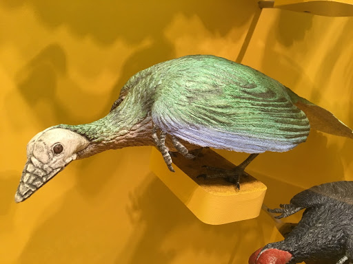 Archaeopteryx-Modell