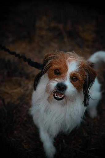 phobie chien hypnose eaubonne val d'oise