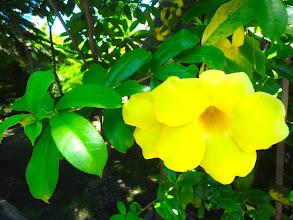 Photo: Les fleurs de Bali