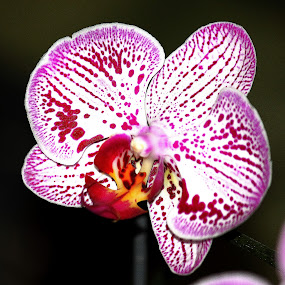 Orchid. by Nguyen Huu Hung - Nature Up Close Flowers - 2011-2013