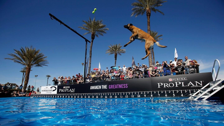 Watch 2016 Incredible Dog Challenge live