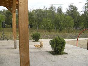 Photo: Kutya-macska barátságban az Emmausban, mert itt ez is lehetséges.