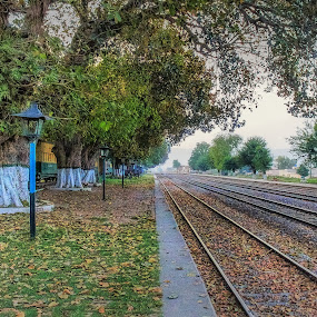 To there... by Fateen Younis - Transportation Railway Tracks ( leading lines, railway, banyan, tracks, lamp posts,  )