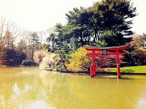 Photo: Brooklyn Botanic Gardens