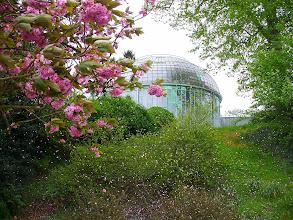Photo: pioggia di petali