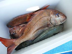 Photo: ウラカミパパの釣果です!
