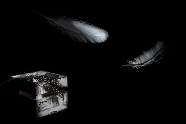 Volare via... di Salvatore Massaiu