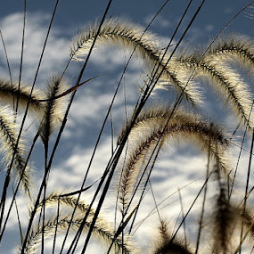 Grasses by Edwin Yepese - Nature Up Close Leaves & Grasses ( macro, backgrounds, novices only, other plants, nature up close )