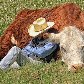 Cow Napping by Twin Wranglers Baker - People Street & Candids (  )