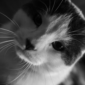 look here. stop taking my pic by Matthew Westfall - Animals - Cats Portraits