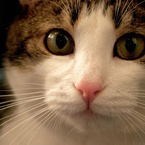 O.O by Luana Racan - Animals - Cats Portraits ( pwc84,  )