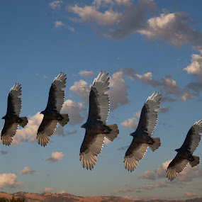Fast Shutter Speed bird by Alex Sam - Animals Birds ( canon, bird, shooter, speed, shutter )