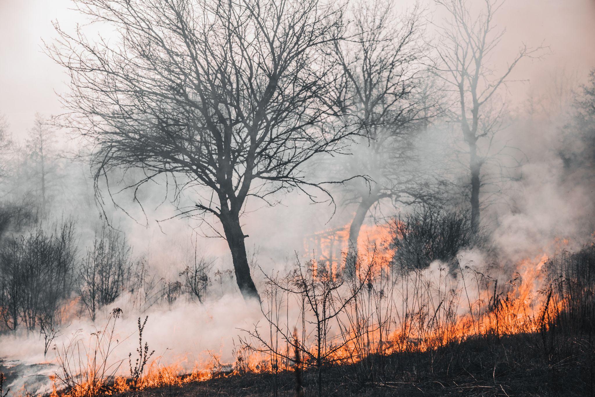 Incêndios florestais na Amazônia e Pantanal causaram danos à população da região (Fonte: Vladyslav Dukhin/Pexels)