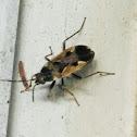 Tuxedo bug