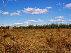 Photo: tout début, les bambous marquent le futur emplacement des ravintsara