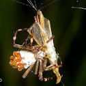 Silverback spider with prey