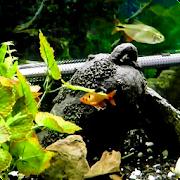 Fish Live Wallpaper HD 2