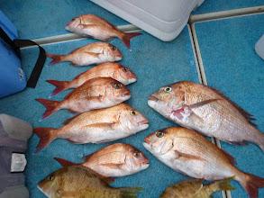 Photo: 真鯛もシブい一日でした。 ・・・一部、卵を持っている真鯛も。