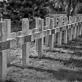 Remembrance Of The Big War by Marco Bertamé - City,  Street & Park  Cemeteries ( ww1, cemetry, militry, cross, france, verdun, in a row, diagonal, crosses, french )