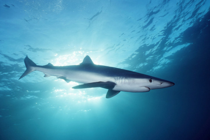 virtual vr swimming with sharks