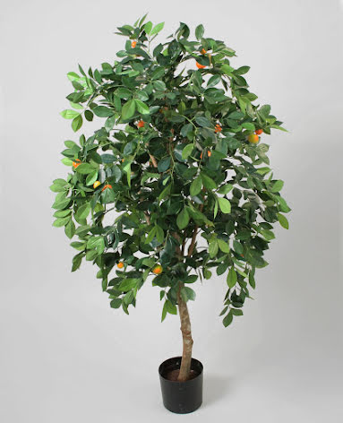 Orange Tree (Apelsinträd) - 90cm & 140cm