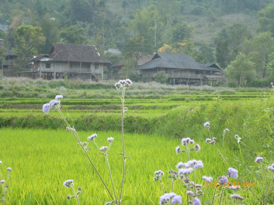 khung cảnh bản làng thanh bình
