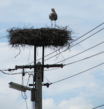 Photo: Day 65 - Stork on his Nest on the Top of a Telegraph Pole in an Hungarian Village