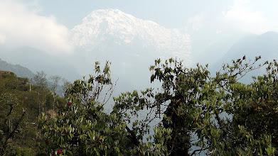 Photo: letzte Rhododendren vor der Annapurna South