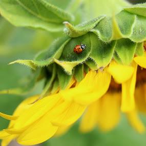 A Lady by Stephanie Munguia-Wharry - Novices Only Flowers & Plants ( ladybug, flower )