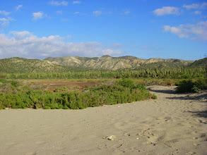 Photo: Island Cardon forest