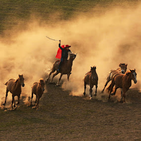 by Vinod Chauhan - Animals Horses ( inner mongolia, horses, sports, action, horse galloping )