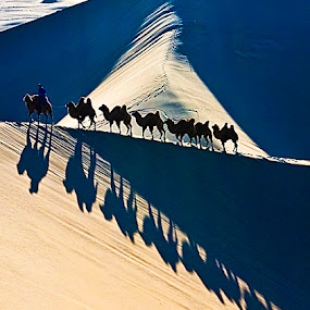 Camels Shadow by Goh Poh Leong - Landscapes Deserts