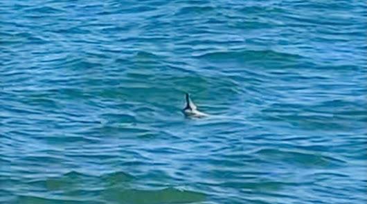 Estampida general en una playa de Palomares tras la aparición de un tiburón