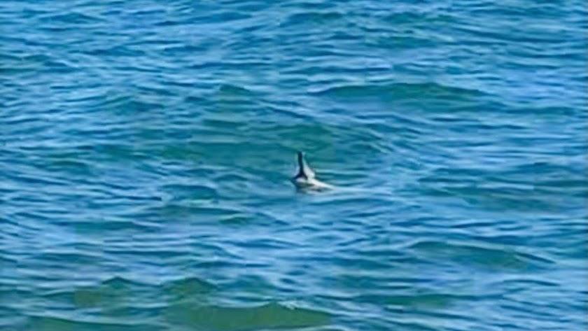 La aleta dorsal del tiburón sobresaliendo por encima del nivel del agua.