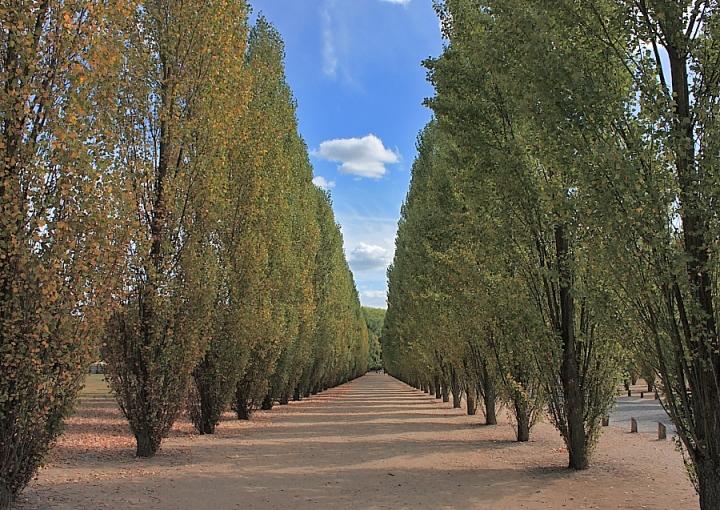 Versailles di Alessandro Remorini